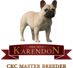 Karendon French Bulldogs